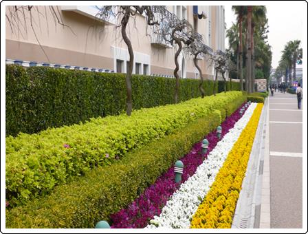 壁纸 成片种植 风景 花墙 景观 墙 植物 种植基地 桌面 448_340