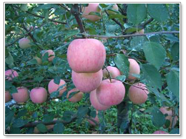 果树盆景盆栽技术——西南大学网络教育学院